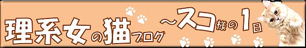 理系女の猫ブログ~スコちゃんの1日